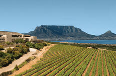 full-day-durbanville-valley-private-wine-tasting-tour-from-cape-town-in-cape-town-385064